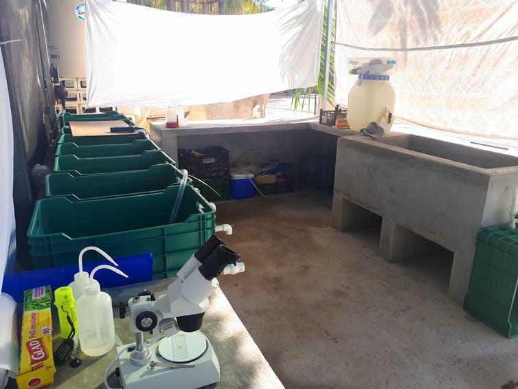 Un intérieur de laboratoire avec des caisses remplies d'eau et un microscope.